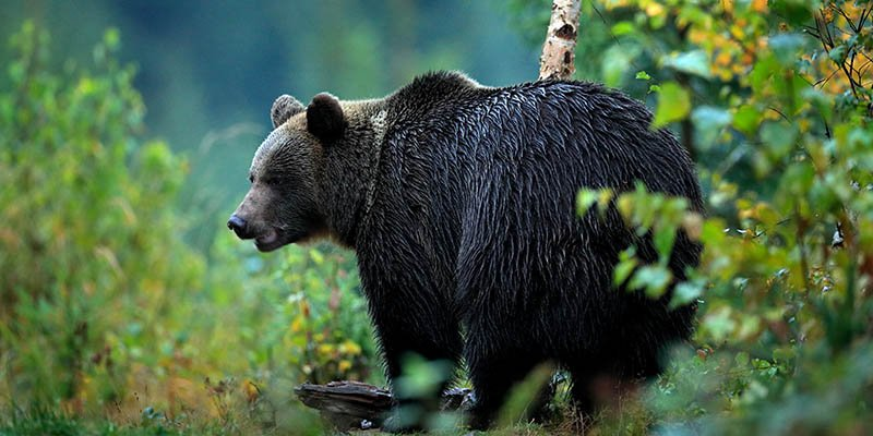 dealing with bears and mountain lions while hiking